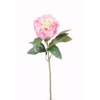 Pione mini Rose 42cm