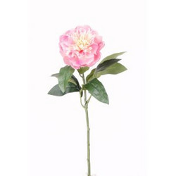Pione mini Rose 42cm