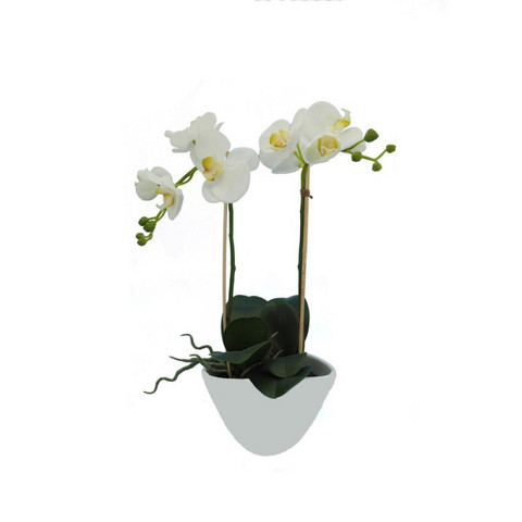 Orchid in a pot 50cm White