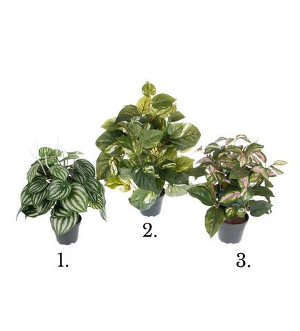 Green Plant Mix