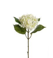 Hydrangea 40cm White