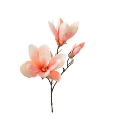 Magnolia 65cm Orange