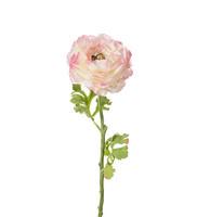 Jaloleinikki 50cm Pinkki