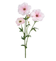 Ranunculus 55cm Pink