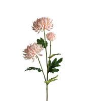 Chrysanthemum 60cm Pinkki