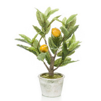 Lemon tree 45 cm