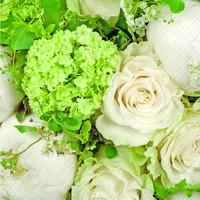 Elaria Green  Napkin