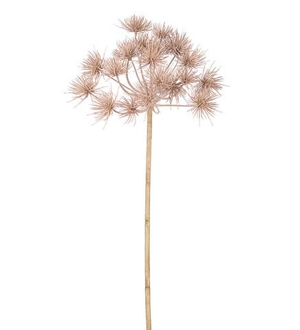 Allium 80cm