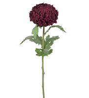 Chrystanthemum 70cm