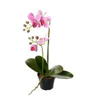 Orchid 45cm