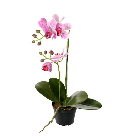 Orkidea 45cm
