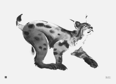 Lynx Poster 70x50