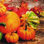 Pumpkins Napkin