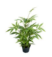 Bambu 45 cm