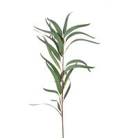 Eucalyptus 100 cm