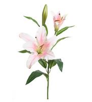 Lilja 70cm Pinkki