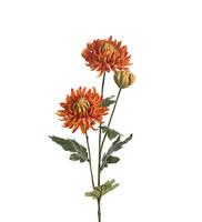 Chrysanthemum 60 cm