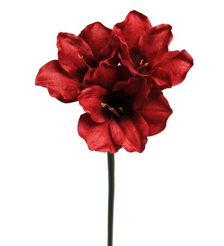 Amaryllis 65 Punainen