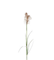 Grass 75 cm