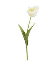 Tulip White 70 cm
