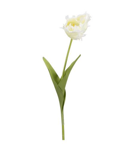 Tulppaani valkoinen 70 cm
