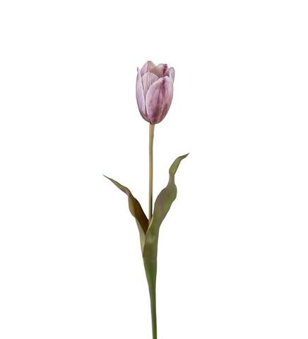 Tulip purple 58 cm