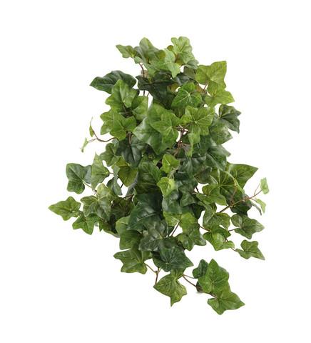 Ivy 50cm