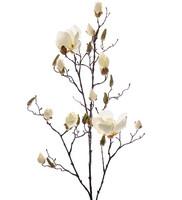 Magnolia White 110 cm