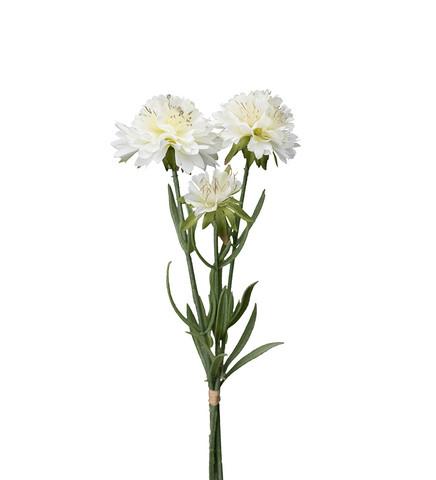 Scabiosa bunt White 30 cm