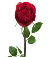 Ruusu 75 cm Punainen