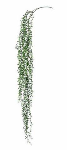 Helmivillakko silkkikasvi