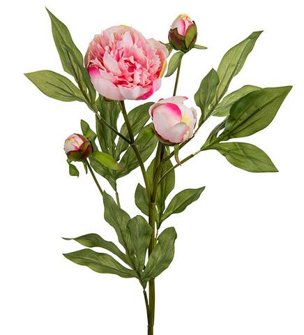 Pioni oksa 65 cm vaaleanpunainen