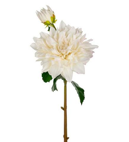 Dahlia white 70 cm