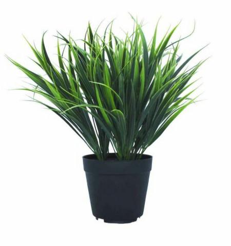 Grass bush 30 cm in a pot