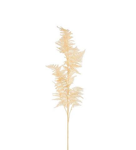 Plumosus oksa 110cm