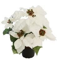 Poinsettia white 35 cm