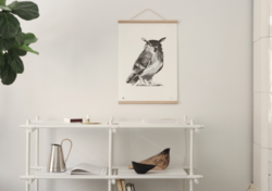 Owl Poster 50x70