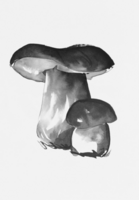 Porcini Mushroom art card
