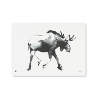 Elk Poster 70x50