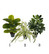 Green Plant Mix 2