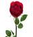 Rose 75 cm Red