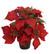 Joulutähti punainen 35 cm