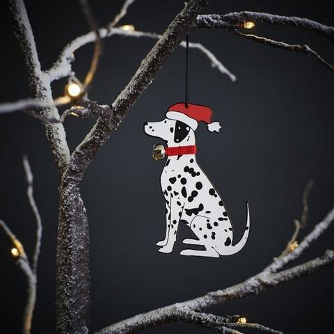 Joulukoriste, Dalmatialainen