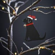 Joulukoriste, Labradorinnoutaja, musta