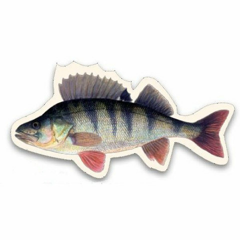 Kala-aiheinen magneetti, useita eri lajeja