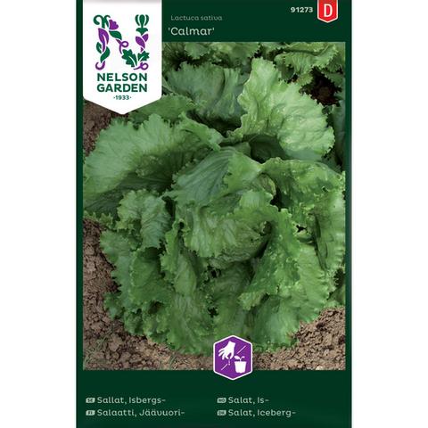 Salaatti, Jäävuori- 'Calmar'