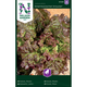 Salaatti, Lehti- 'Amerikanischer brauner'