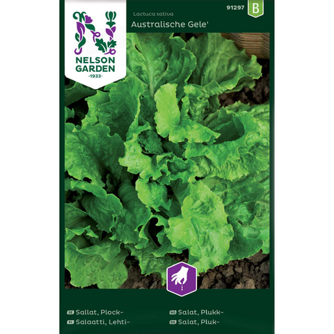 Salaatti, Lehti- 'Australishe Gele'