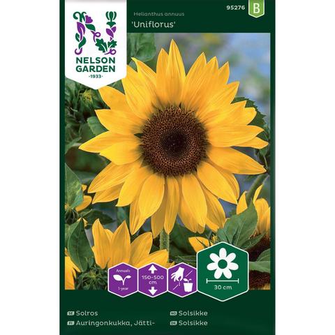Auringonkukka, Jätti- 'Uniflorus'