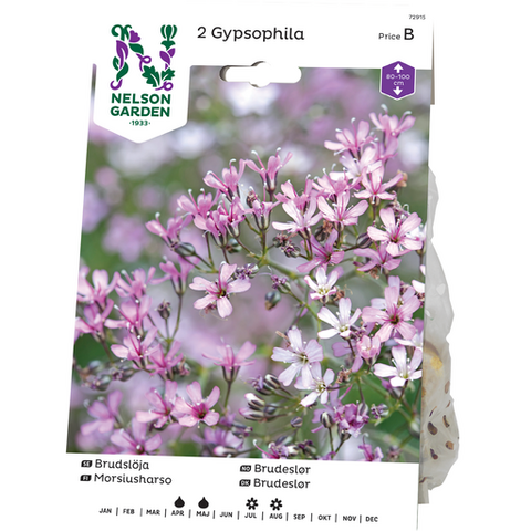 Harso, Morsius-, Gypsophila, roosa